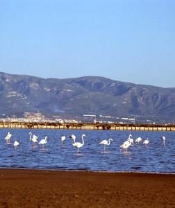 Nature park delta of the Ebro