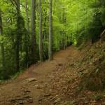 Auf dem Weg zum Puigsacalm im Frühling