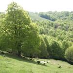 Wald und Almen auf dem Puigsacalm