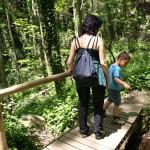 Spaziergang in den Wäldern des Montseny