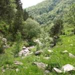 Pyrenäental im Sommer