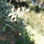 Mediterranean vegetation in Collserola