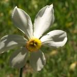 Wunderbare Blumenwelt im Sorteny-Tal